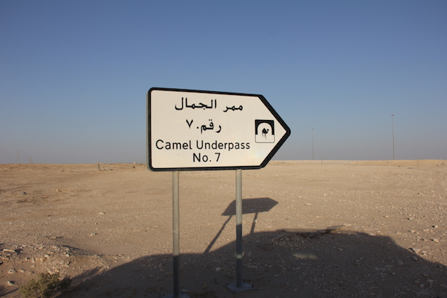 a road sign in Qatar on the way to Richard Serra's East-West/West-East, photograph by Molly Waterman for Hyperallergic