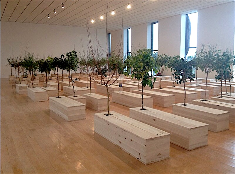 Partial installation view of Yoko Ono's Ex It (100 coffins, 100 trees) at Musée d'Art Contemporain in Lyon, 2016; image via Télé Lyon Métropole